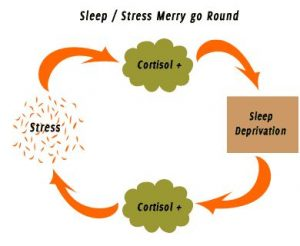 Stay-Healthy-by-Getting-Enough-Sleep-cortisol